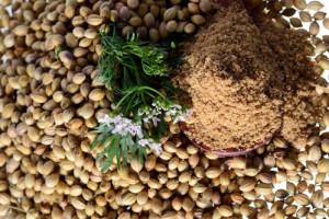 We ship bulk Coriander, Caraway, Brown Flax and Borage